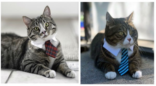 two cats with neckties