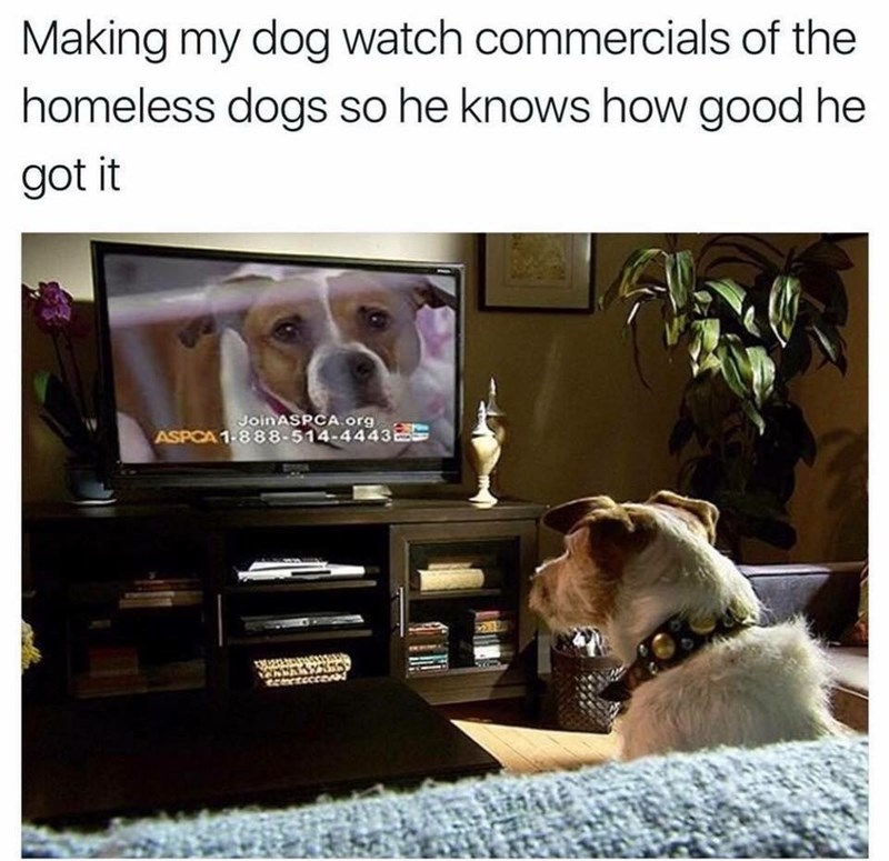 work meme about guilting your dog