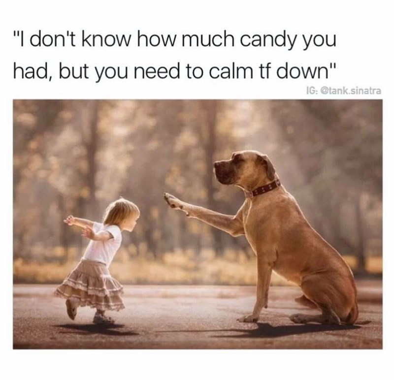 work meme about a dog trying to calm a kid with a sugar rush