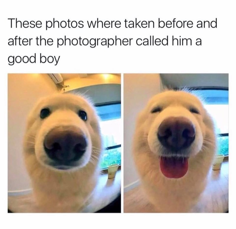 work meme with pics of a dog smiling after being told he's a good boy