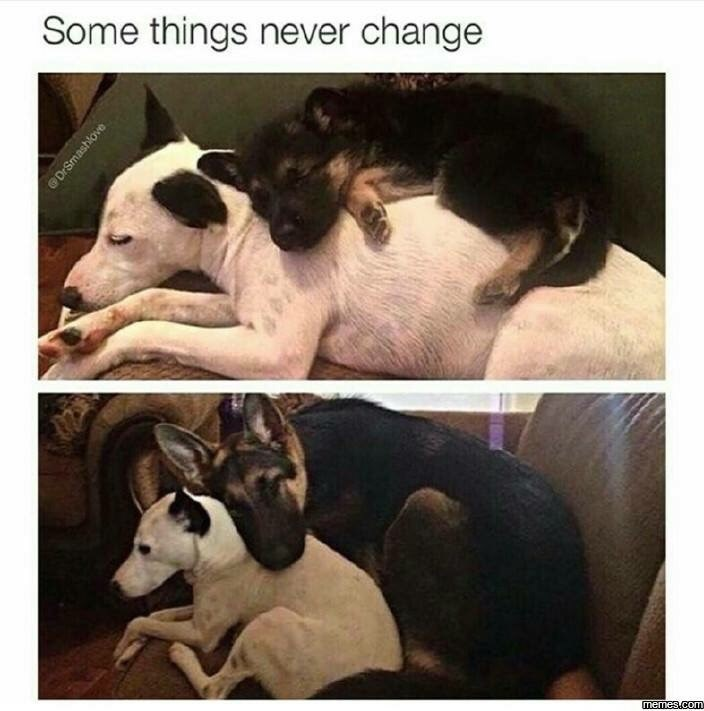 work meme with pics of two dogs cuddling together over the years