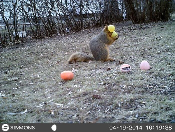 Ball - SIMMONS 04-19-2014 16:19:38