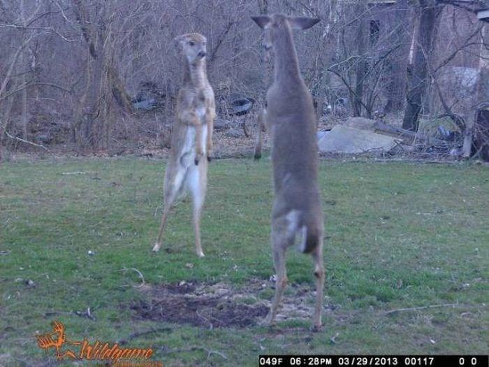 kangaroo - 0 0 049F 06 28PM 03/29/2013 00117