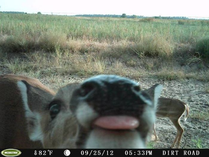 Wildlife - 082 F 05:33 PM 09/25/12 DIRT ROAD MOULTRIE