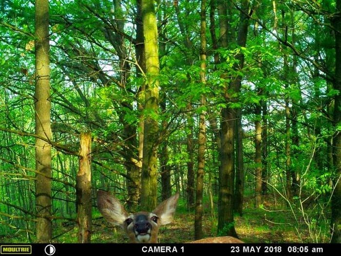 Nature - CAMERA 1 23 MAY 2018 08:05 am MOULTRIE