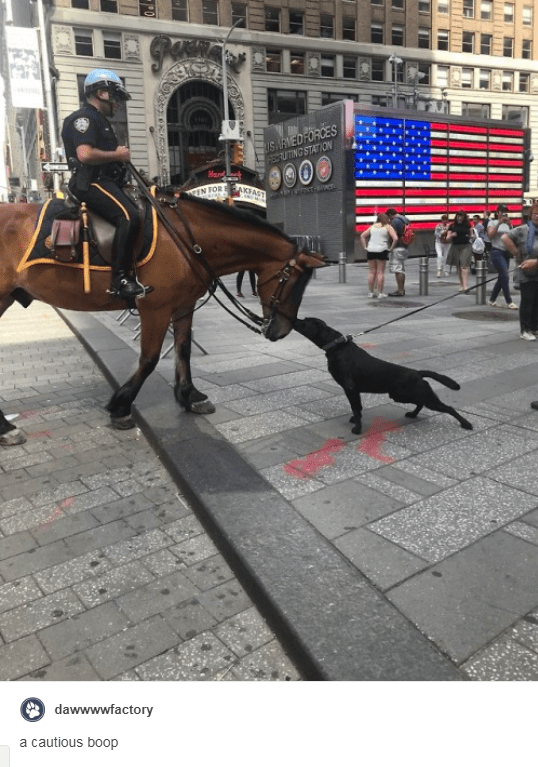 police horse with policeman riding it in the city and black dog on leash touching noses with horse