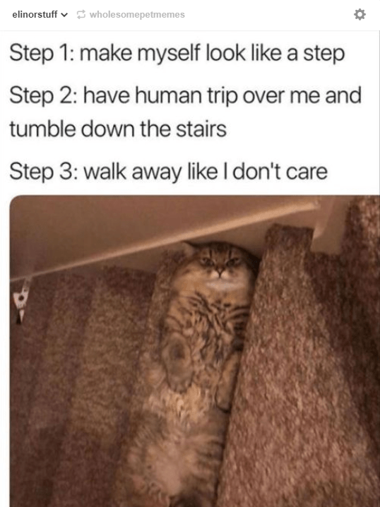 tabby cat lying on back blending into stair case Step 1: make myself look like a step Step 2: have human trip over me and tumble down the stairs Step 3: walk away like I don't care