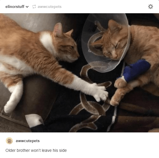 cat in cat collar with bandage on paw and other cat next to it wont leave it's side