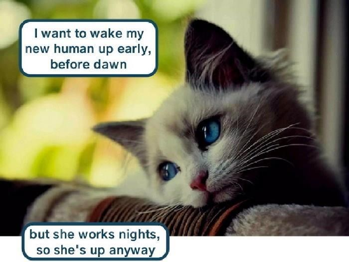 Cat - I want to wake my new human up early, before dawn but she works nights, so she's up anyway