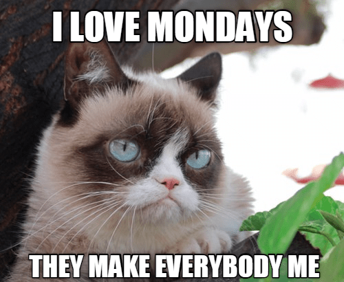 Cat - I LOVE MONDAYS THEY MAKE EVERYBODY ME
