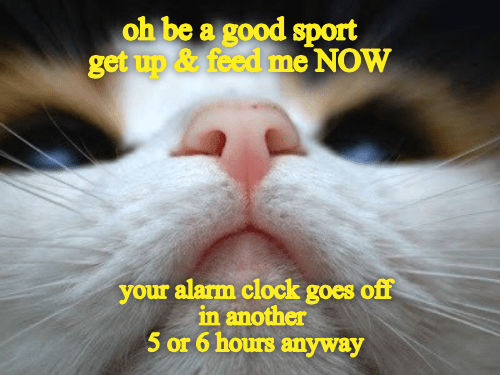 Nose - oh be a good sport get up &feed me NOW your alarm clock goes off in another 5 or 6 hours anyway