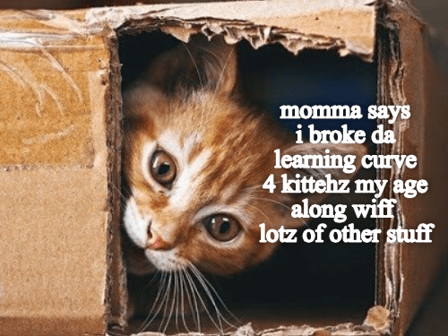 Cat - momma sayS ibroke da learning curye 4 kittehz my age along wif lotz of other stuff