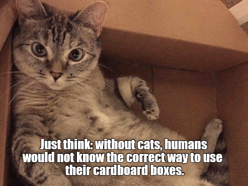 Cat - Just think: without cats, humans would not knoW the correct Way to use their cardboard boxes.