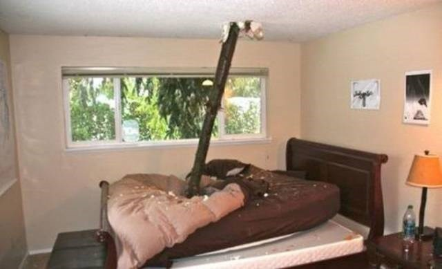 Cheezburger Image 9188487936