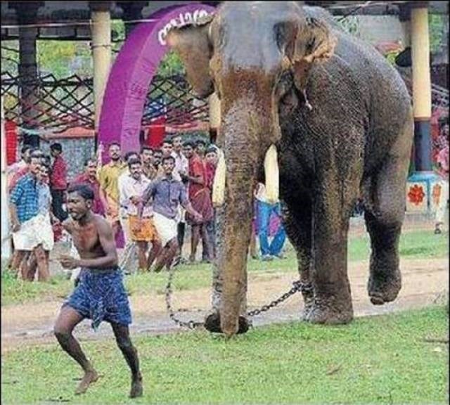 Cheezburger Image 9188494592