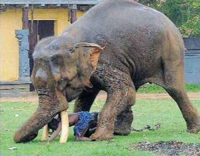 Cheezburger Image 9188494848