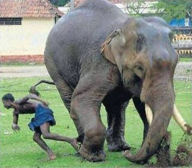 Cheezburger Image 9188495104