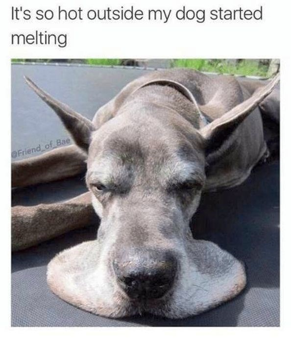 Mammal - It's so hot outside my dog started melting OFriend of Bae