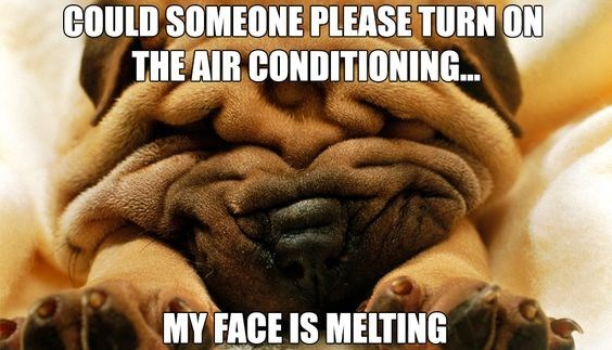 Dog - COULD SOMEONE PLEASE TURN ON THE AIR CONDITIONING MY FACE IS MELTING