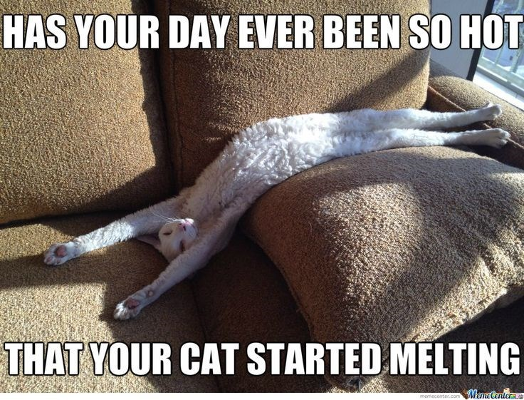 Photo caption - HAS YOUR DAY EVER BEEN SO HOT THAT YOUR CAT STARTED MELTING MemeCantera memecenter.com