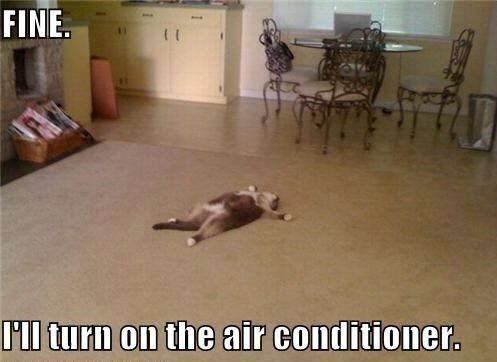 Floor - FINE I'll turn on the air conditioner.
