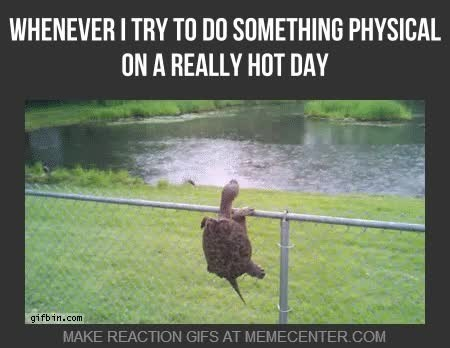 Nature - WHENEVER I TRY TO DO SOMETHING PHYSICAL ON A REALLY HOT DAY gifbin.com MAKE REACTION GIFS AT MEMECENTER.COM