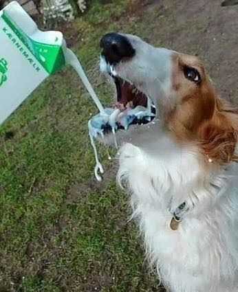 thirsty - Dog - KARNEMALK