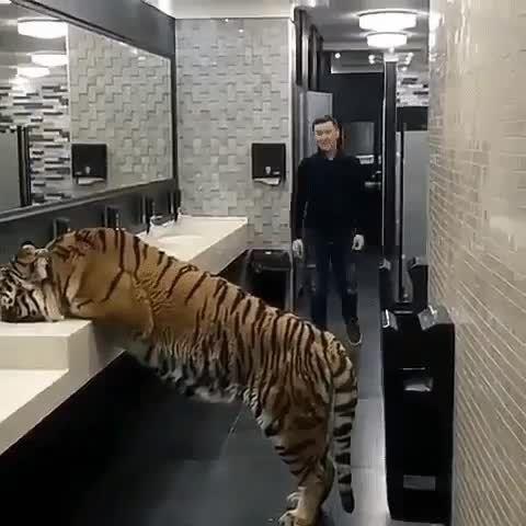 thirsty - Tiger