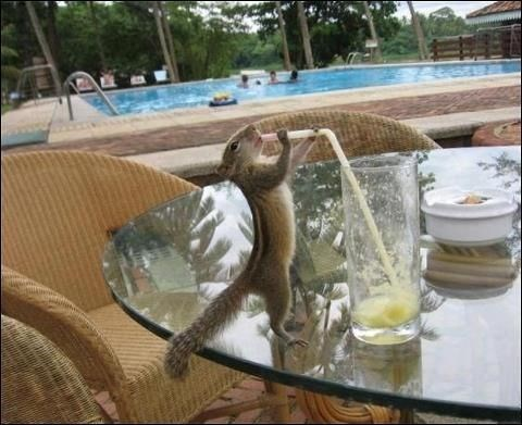 thirsty - Reptile
