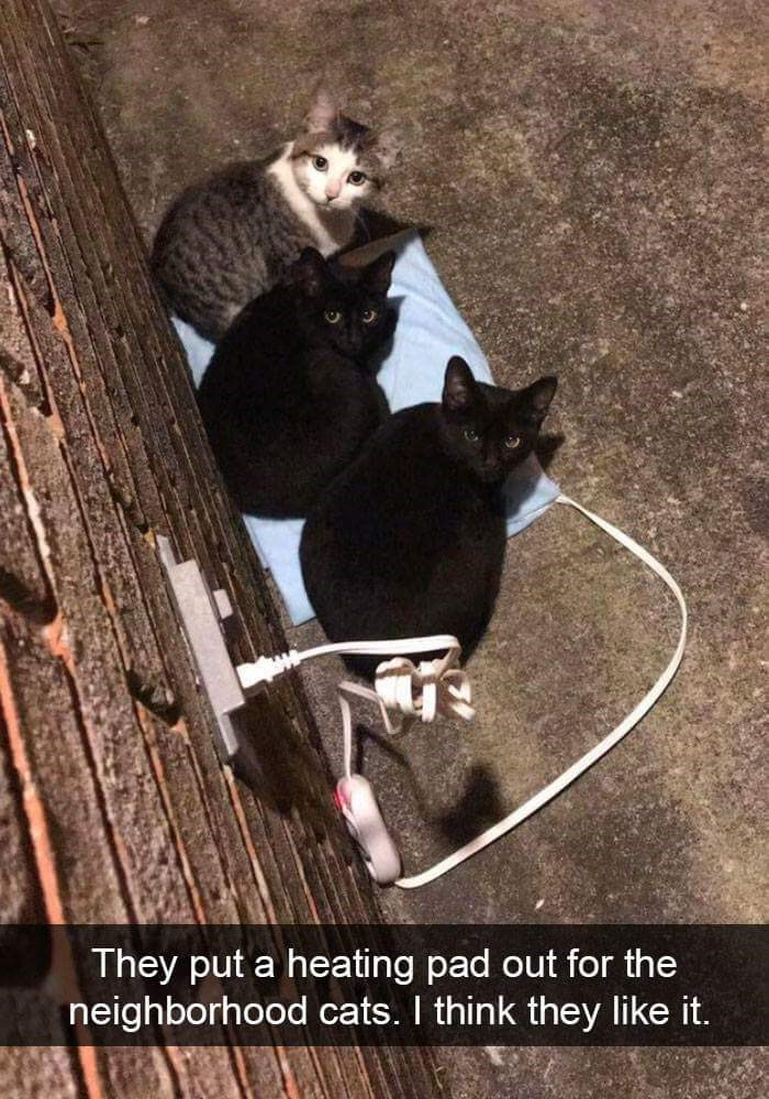 Photo caption - They put a heating pad out for the neighborhood cats. I think they like it.
