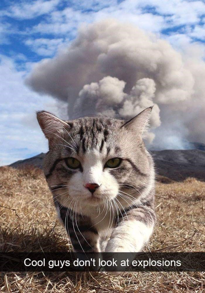 Cat - Cool guys don't look at explosions