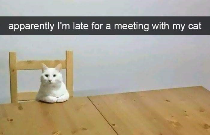Wood - apparently I'm late for a meeting with my cat