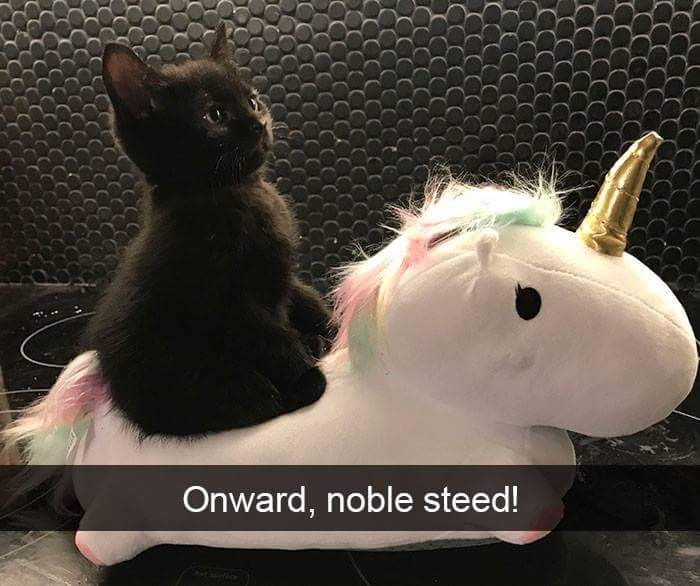 Cat - Onward, noble steed!