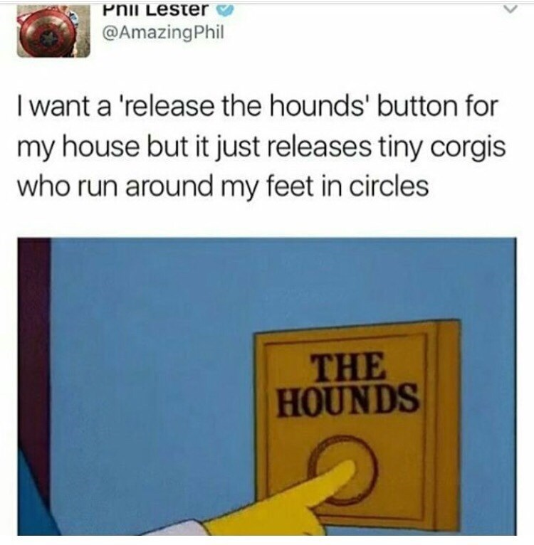 "Tweet that reads, ""I want a 'release the hounds' button for my house but it just releases tiny corgis who run around my feet in circles"""