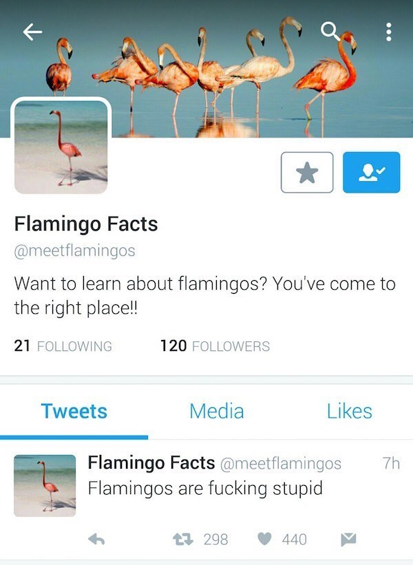 Text - Flamingo Facts @meetflamingos Want to learn about flamingos? You've come to the right placel!! 21 FOLLOWING 120 FOLLOWERS Media Likes Tweets Flamingo Facts @meetflamingos Flamingos are fucking stupid 7h 440 t 298