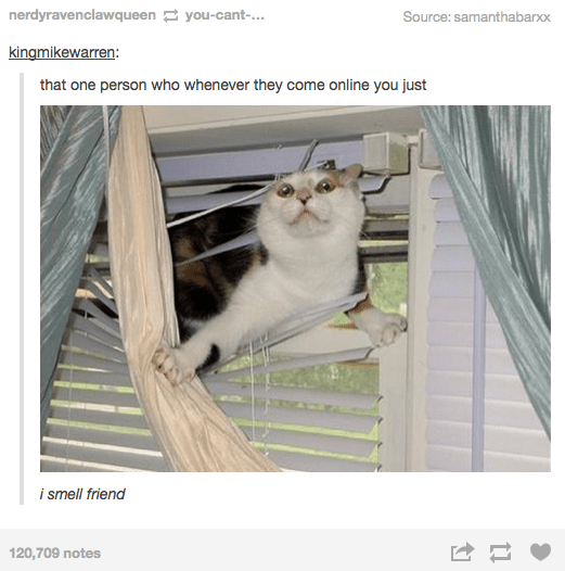Cat - nerdyravenclawqueen you-cant-... Source: samanthabarxx kingmikewarren: that one person who whenever they come online you just i smell friend 120,709 notes