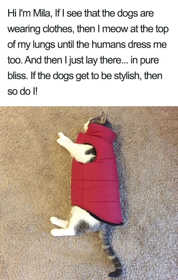 shaming - Text - Hi I'm Mila, If I see that the dogs are wearing clothes, then I meow at the top of my lungs until the humans dress me too. And then I just lay there... in pure bliss. If the dogs get to be stylish, then so do I!