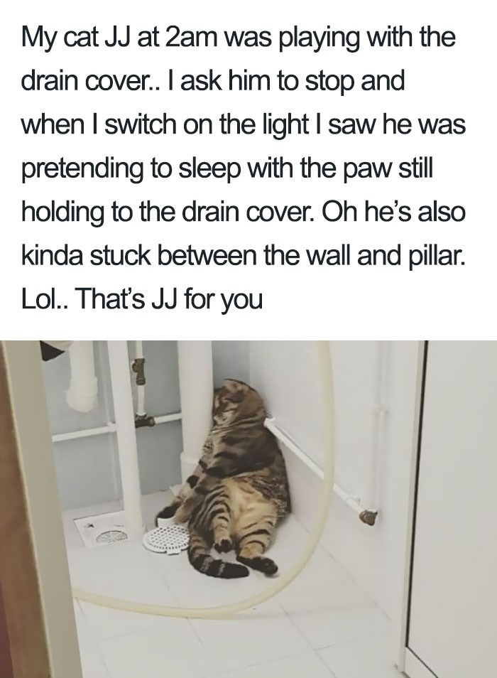 shaming - Text - My cat JJ at 2am was playing with the drain cover.. I ask him to stop and when I switch on the light I saw he was pretending to sleep with the paw still holding to the drain cover. Oh he's also kinda stuck between the wall and pillar. Lol.. That's JJ for you