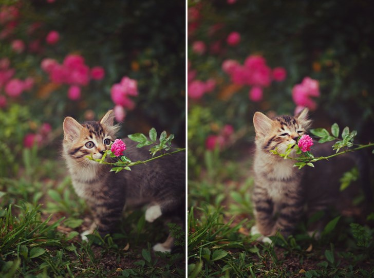 cute animals flowers nature