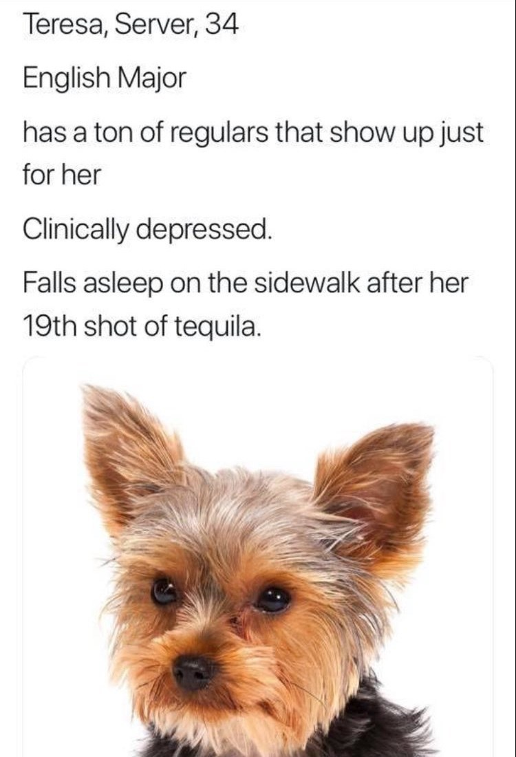 work meme - Yorkshire terrier - Teresa, Server, 34 English Major has a ton of regulars that show up just for her Clinically depressed. Falls asleep on the sidewalk after her 19th shot of tequila.