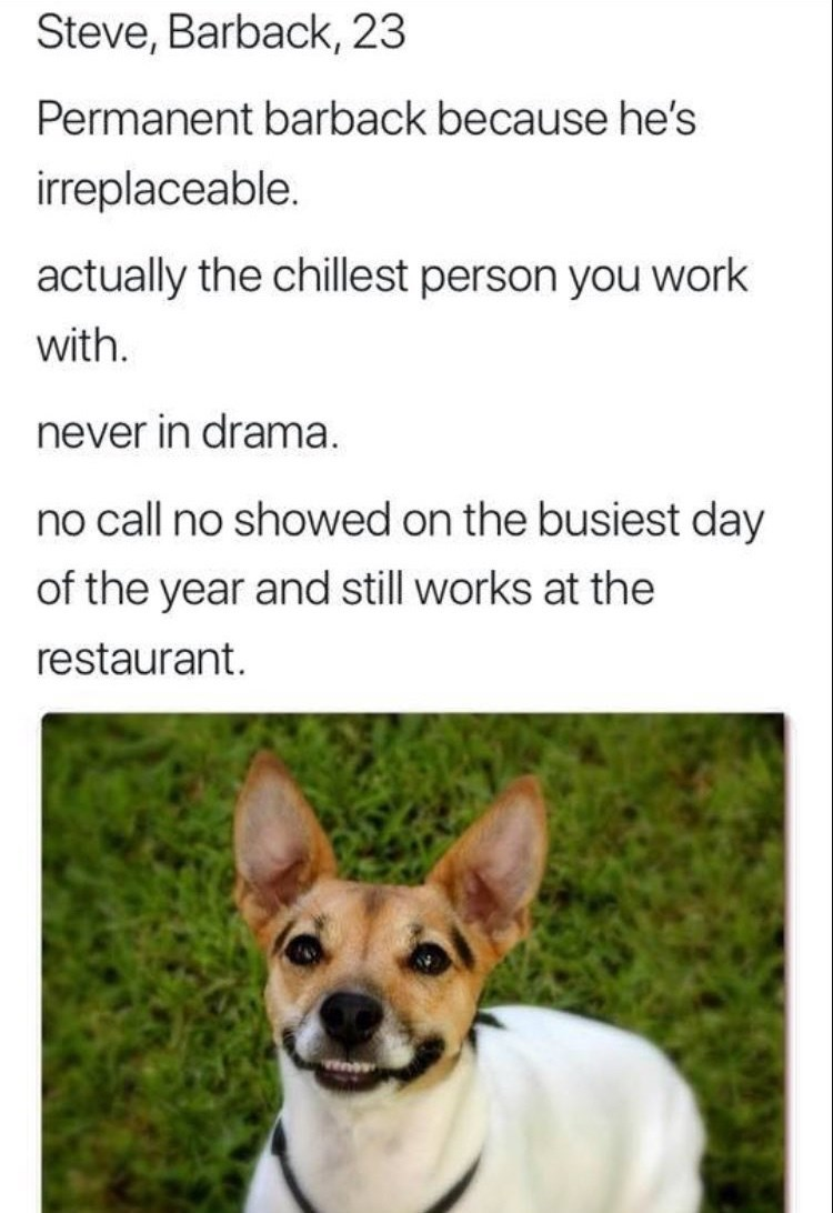 work meme - Mammal - Steve, Barback, 23 Permanent barback because he's irreplaceable. actually the chillest person you work with. never in drama no call no showed on the busiest day of the year and still works at the restaurant.