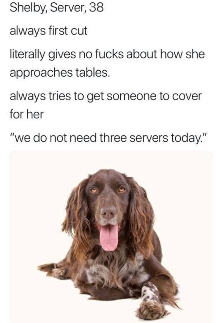 """work meme - Dog - Shelby, Server, 38 always first cut literally gives no fucks about how she approaches tables. always tries to get someone to cover for her """"we do not need three servers today."""""""