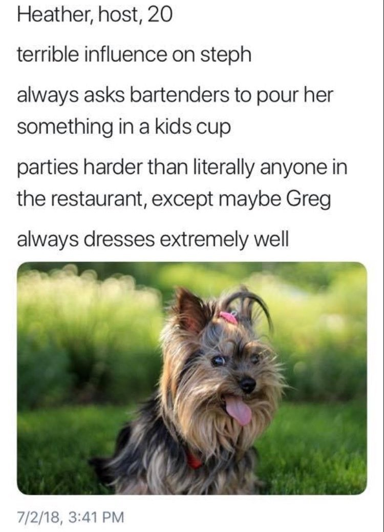 work meme - Dog - Heather, host, 20 terrible influence on steph always asks bartenders to pour her something in a kids cup parties harder than literally anyone in the restaurant, except maybe Greg always dresses extremely well 7/2/18, 3:41 PM