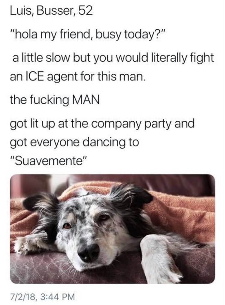 """work meme - Canidae - Luis, Busser, 52 """"hola my friend, busy today?"""" a little slow but you would literally fight an ICE agent for this man. the fucking MAN got lit up at the company party and got everyone dancing to """"Suavemente"""" 7/2/18, 3:44 PM"""