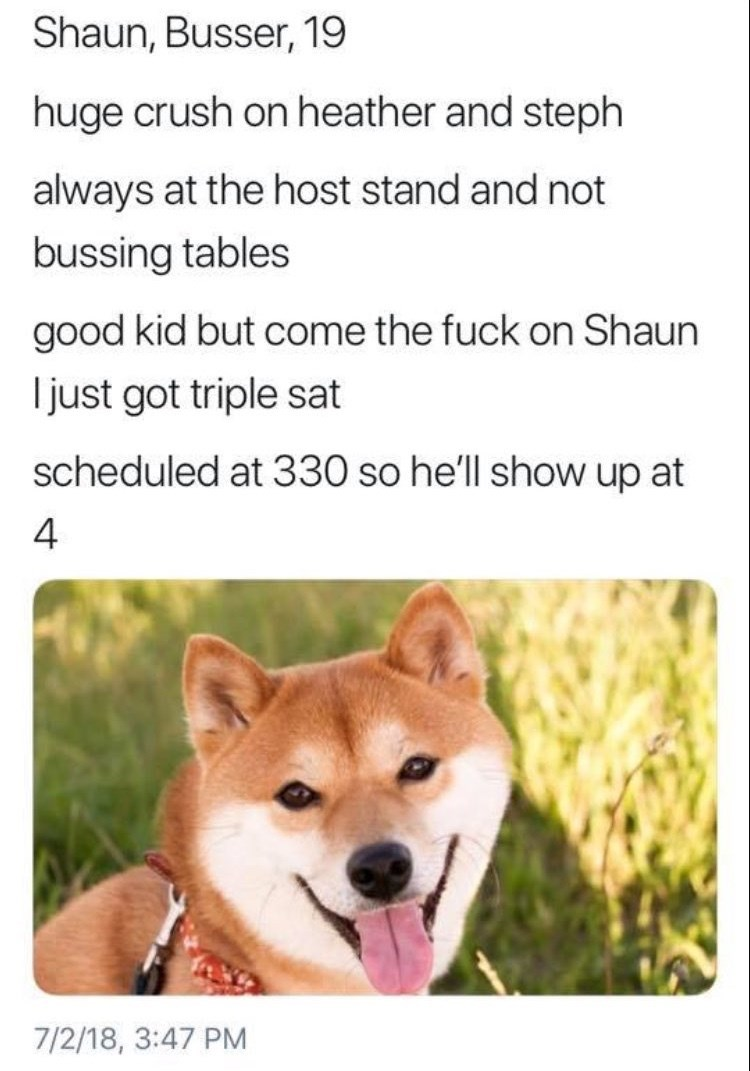 work meme - Dog - Shaun, Busser, 19 huge crush on heather and steph always at the host stand and not bussing tables good kid but come the fuck on Shaun just got triple sat scheduled at 330 so he'll show up at 4 7/2/18, 3:47 PM