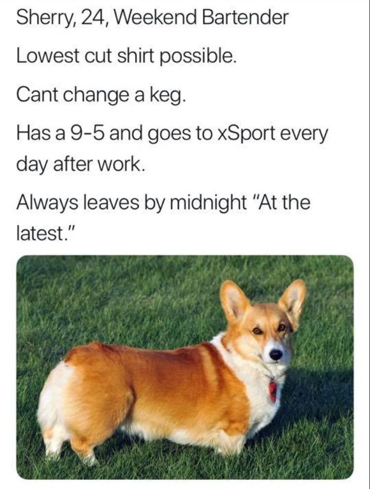"""work meme - Dog - Sherry, 24, Weekend Bartender Lowest cut shirt possible. Cant change a keg. Has a 9-5 and goes to xSport every day after work. Always leaves by midnight """"At the latest."""" II"""