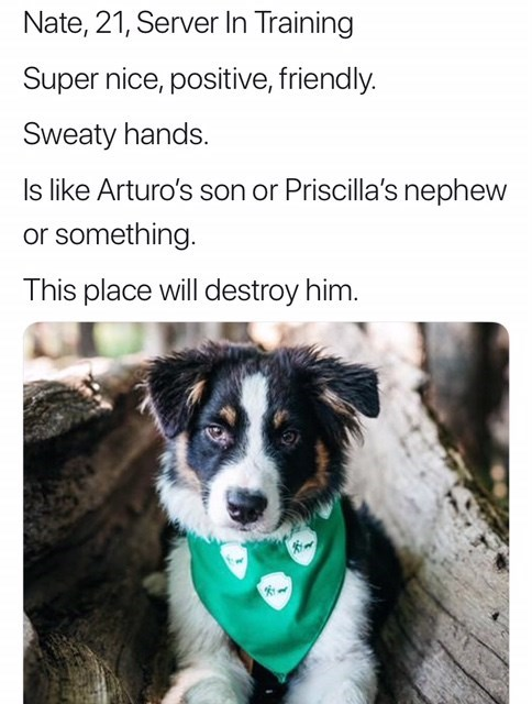 work meme - Dog - Nate, 21, Server In Training Super nice, positive, friendly. Sweaty hands. Is like Arturo's son or Priscilla's nephew or something. This place will destroy him.