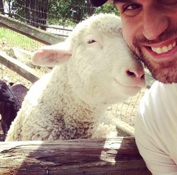 cool pic - Sheep