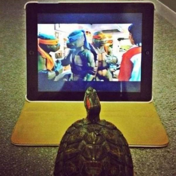 cool pic - Turtle