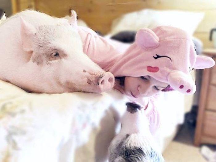 cool pic - Domestic pig